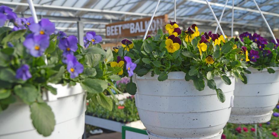 Beet- und Balkonpflanzen waren im Jahr 2020 sehr beliebt. Pro Kopf gaben die Deutschen mehr als 23 Euro dafür aus.