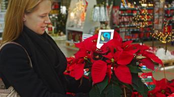 Fairtrade-Weihnachtssterne kommen in den Garten- und DIY-Handel