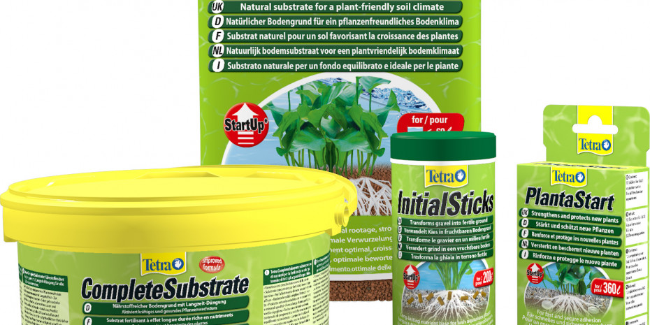 Tetra, Wasserpflanzen, Pflanzenpflege