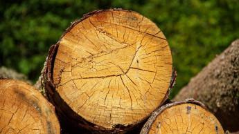Eingeschlagene Schadholzmenge erreicht Rekordwert