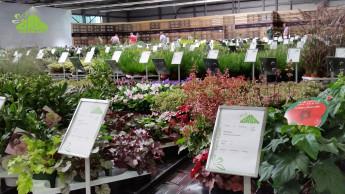 Digitale Hilfe für den Pflanzenverkauf