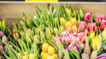 Aldi verkauft bald nur noch nachhaltige Blumen und Pflanzen