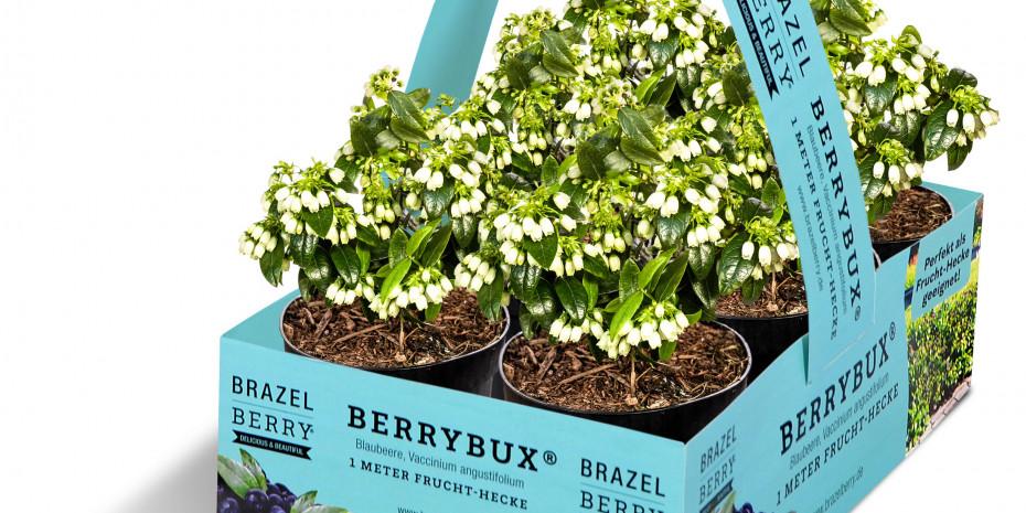 zu Jeddeloh Pflanze, BerryBux