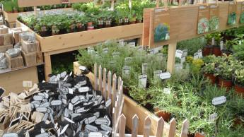 Sagaflor-Gartencenter liegen rund 10 Prozent im Plus