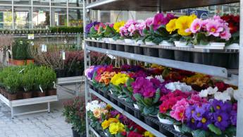In Thüringen dürfen Gartencenter ab 1. März wieder öffnen