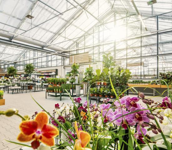 Die Verkaufsfläche beträgt rund 5.000 m².