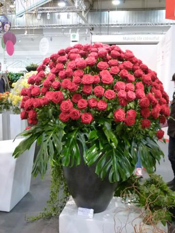 Unangefochten die Nummer eins unter den Schnittblumen ist die Rose. Foto: Grimminger