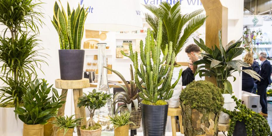 IPM, Pflanzentrends, Trendpflanzen