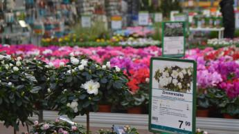LEH und Floristen gewinnen, DIY und Gartencenter verlieren