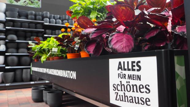 Die Gartencenterbetreiber so wie hier Ostmann in Oldenburg haben viel dafür getan, die Kunden im zweiten Corona-Jahr - sicher - in die Märkte zu bekommen.