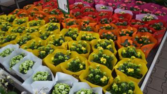 Der grüne Markt erreicht wieder das Niveau von 2012