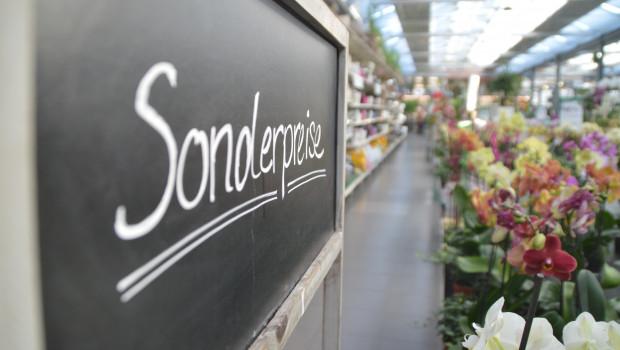 Der Gartenhandel hat 2019 zwar fast drei Prozent mehr umgesetzt. Preisbereinigt bleiben nach vorläufigen Destatis-Zahlen jedoch nur 0,7 Prozent.