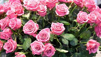 Denkwürdiger Muttertag 2020 im Blumenhandel
