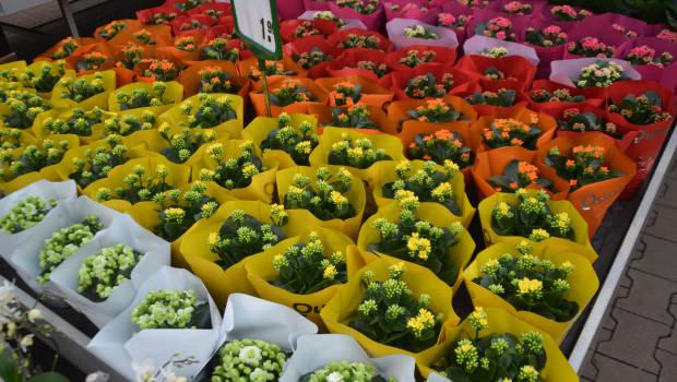 Der grüne Markt hat 2015 um 1,5 Prozent zugelegt. Während Indoorpflanzen leicht verloren haben, gab es bei Outdoorpflanzen Zuwächse über dem Marktdurchschnitt.