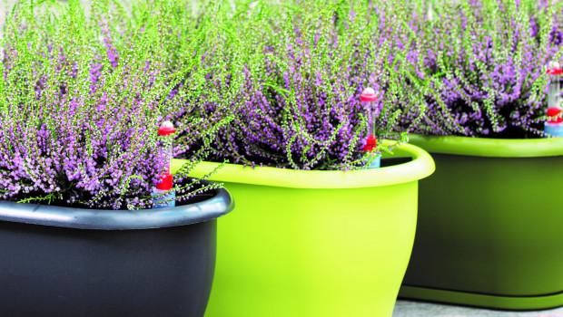 Die Elho-Gruppe ist einer der großen europäischen Hersteller von Pflanzgefäßen aus Kunststoff.