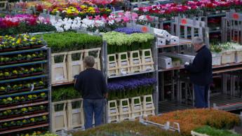 Royal FloraHolland steigert Umsatz 2019 um 3,1 Prozent