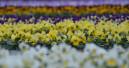 Neue EU-Verordnung zur Kennzeichnung von Pflanzen