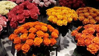 Liebe geht durch den Geldbeutel und durch das Blumengeschäft