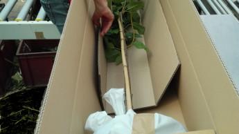 profi-pflanzen.de plant Erweiterung auf mehr als 3.000 Artikel