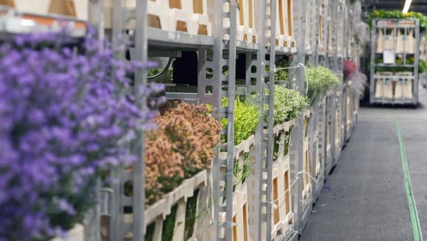 Royal Flora-Holland vermarktet Blumen und Pflanzen an verschiedene Vertriebskanäle.