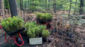 Die ersten 300 Bäume sind gepflanzt