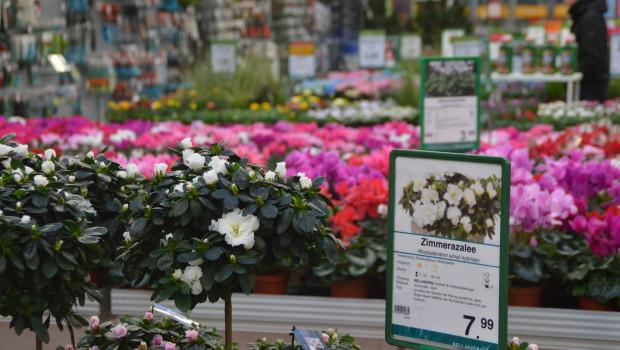Um Pflanzen und Gartenprodukte einzukaufen, gehen die meisten Verbraucher nach wie vor ins Gartencenter. Die Tendenz ist laut Vuma allerdings abnehmend.