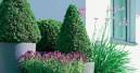 Garten Neuheiten
