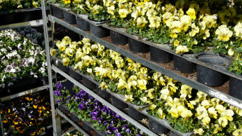 Gartencenter in NRW: Click & Meet oder eingeschränktes Sortiment
