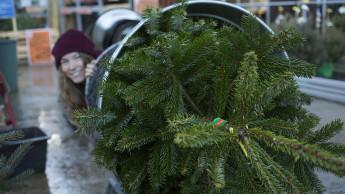 Der Trend geht vom Weihnachts- zum Adventsbaum