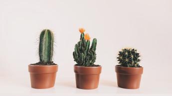 Kaktus auf Instagram am meisten getaggt