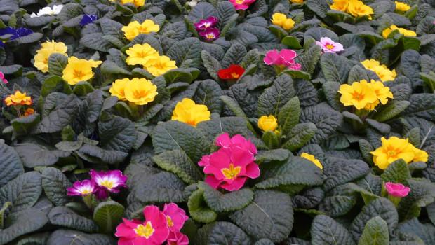 Die Verkaufsaussichten blühen wieder auf - besonders zumal immer mehr Gartencenter öffnen dürfen.