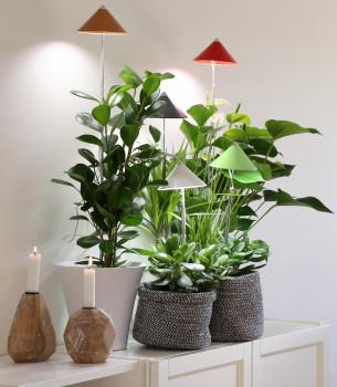 SUNLiTE LED-Pflanzenlampe, Venso EcoSolutions