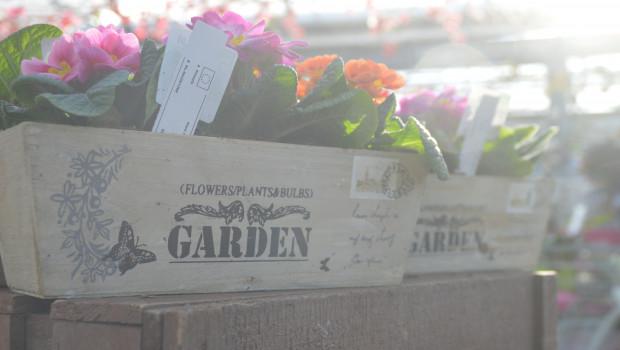 Über dem Gartenteschäft schien im vergangenen Jahr die Umsatzsonne.