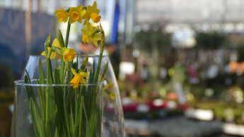 Blumen und Pflanzen: Händler, Produzenten und Vermarkter arbeiten zusammen